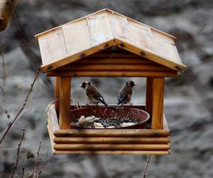 Feeder by Birds and Bees
