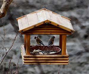 Bird feeder by Garden Wildlife Direct