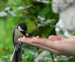 Bird food by Garden Wildlife Direct